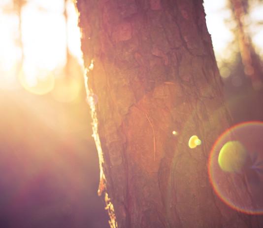 Sunshine in nature